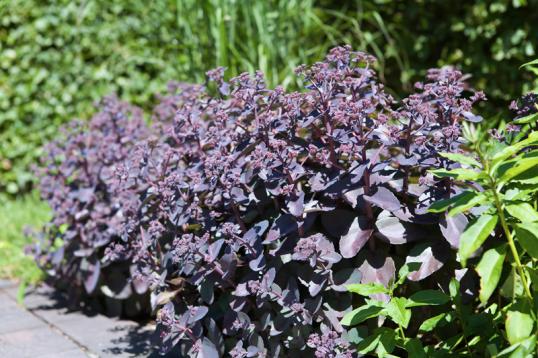 Auf Den Äckern Und Wiesen, In Den Beeten Und Auf Den Terrassen  Vertrockneten Viele Pflanzen, Oftmals Kam ...