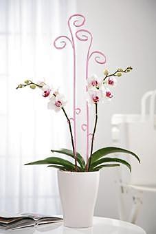 Orchideen perfekt pr sentiert aktuelle wohntrends for Aktuelle wohntrends